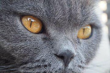 Kattenogen van Maaike Slingerland Schrama