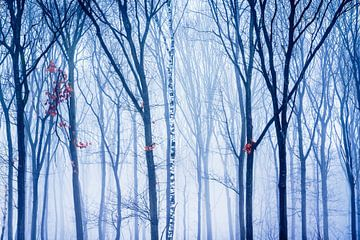 De eenzame berk in het winter bos sur Nando Harmsen