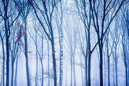 De eenzame berk in het winter bos van
