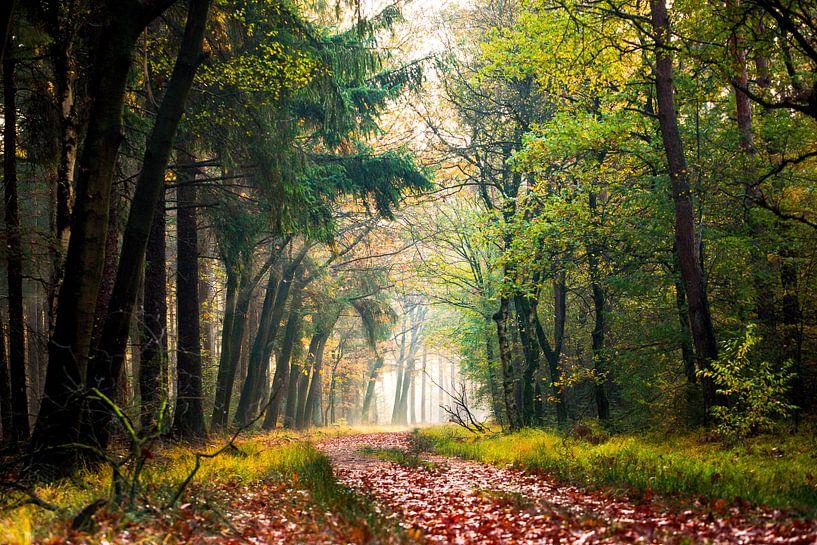 Herfstkleuren in het bos. van Karel Pops