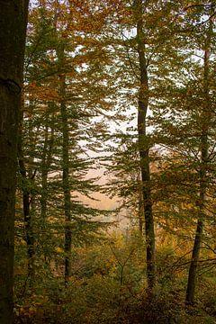Nebliger Wald von Lizet Wesselman