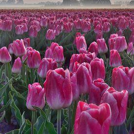 Tulpenveld bij zonsopkomst van John Leeninga