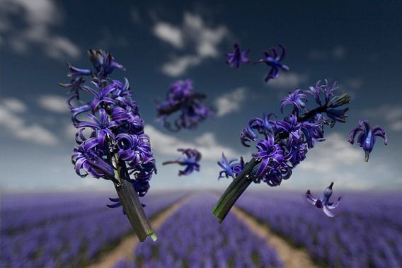 Flower Power - Orientalis