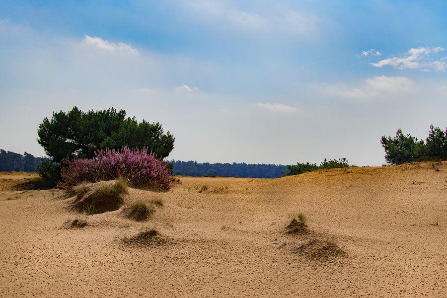 Afbeeldingsresultaat voor veluwe zandverstuiving