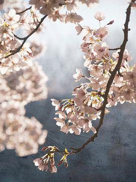 Painterly spring blossom van Rob Visser