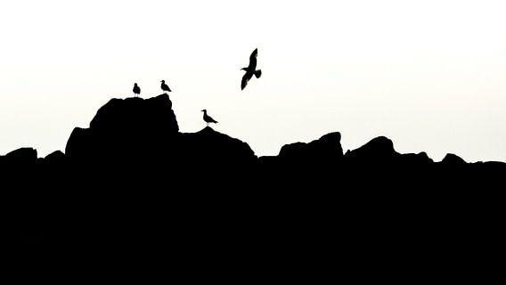 Silhouet vogels opaalkust.