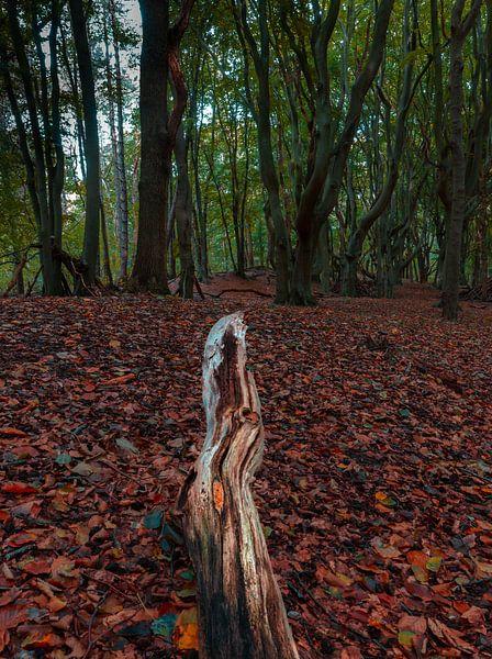 Into the woods van Arisca van 't Hof
