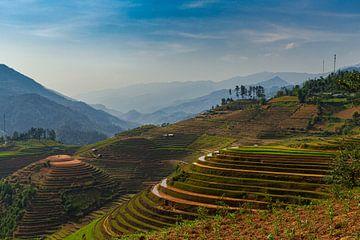 Reisfelder in Vietnam von Dokra Fotografie