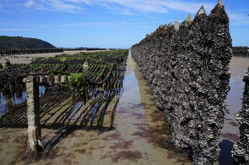 Austernbetten Frankreich von Sandra van der Burg