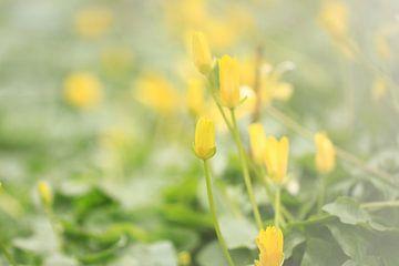 Lente bloemen van Fotografie Sybrandy