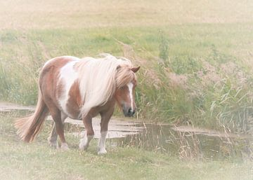 Pony van Naomi van Mierlo