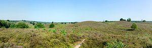Glooiend landschap Nationaal Park Veluwezoom; panorama