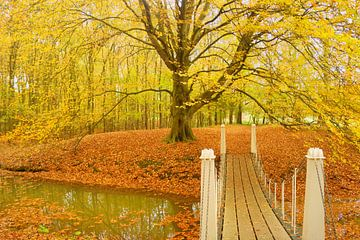 Beuk in herfstkleuren von Michel van Kooten