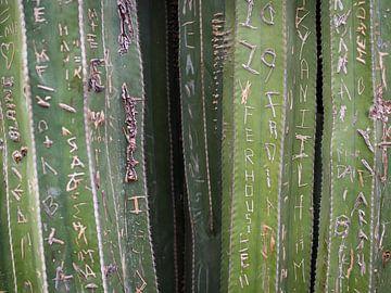 Grüner Kaktus Jardin Majorelle Marrakech von Teun Janssen