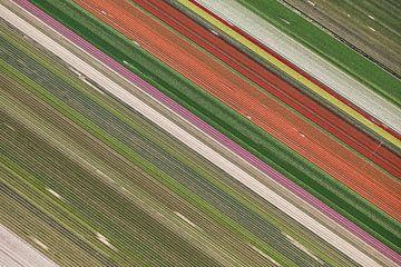 Bunte diagonale Linien von Blumenzwiebelfeldern von Robert Riewald