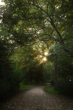 Weg ins Grüne von zwergl 0611