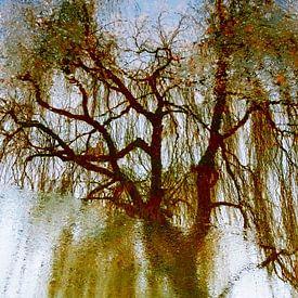 Tree Magic 196 von MoArt (Maurice Heuts)