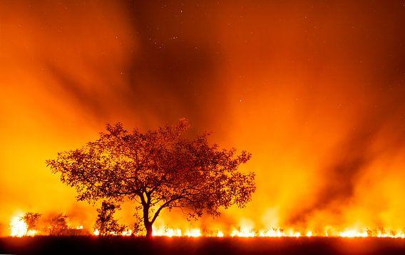 Grasland in brand in de Pantanal van AGAMI Photo Agency
