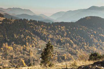 Bunter Herbstwald in den Bergen von Boge, Kosovo von Besa Art