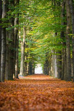 Het Nederlandse bos in de herfst van Michel Geluk
