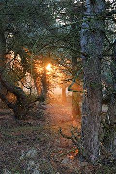 Zonnestralen in het bos von Wouter Bakker