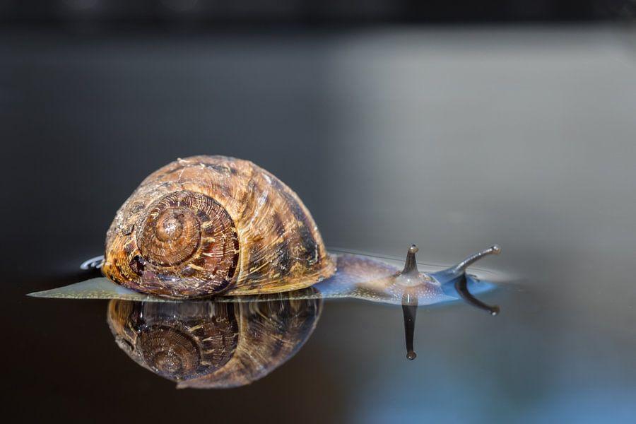 Relaxen Segrijn slak  met spiegeling (reflectie) Relaxing Snail  van T de Smit