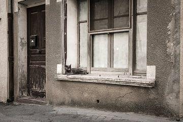 Vensterbank kat von Elles Rijsdijk