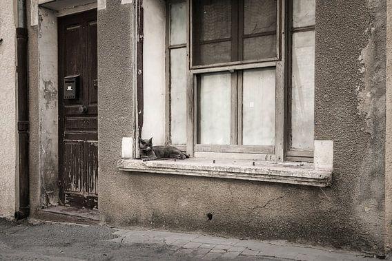 Vensterbank kat