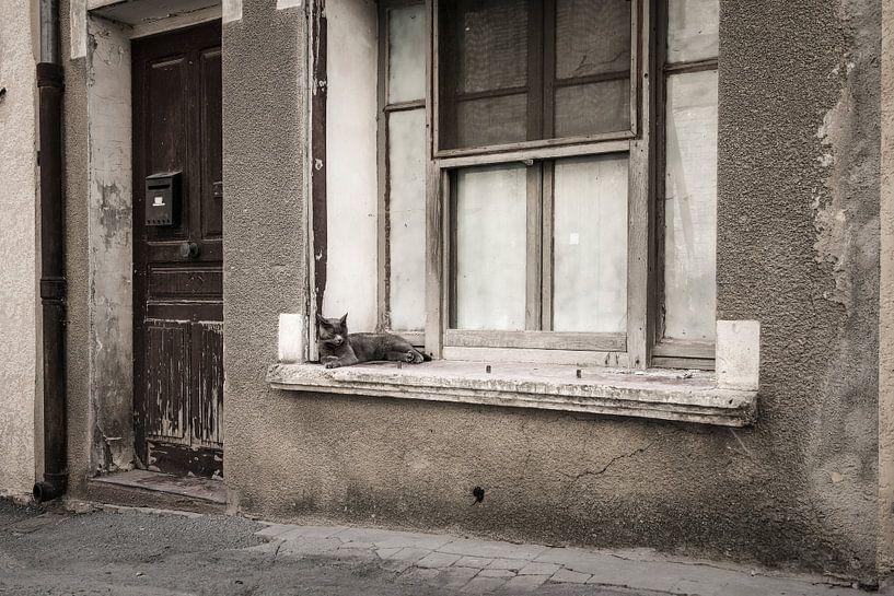 Vensterbank kat van Elles Rijsdijk