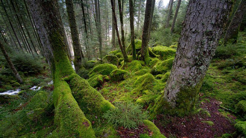 Mos in het bos van Sam Mannaerts Natuurfotografie