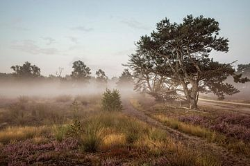 Strabrechtse Heide van Rob Boon