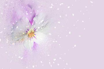 Blüten-Zauber mit fliederfarbenem Hintergrund sur Ursula Di Chito