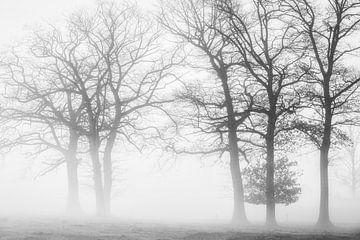 Winterskelette von Joris Pannemans - Loris Photography