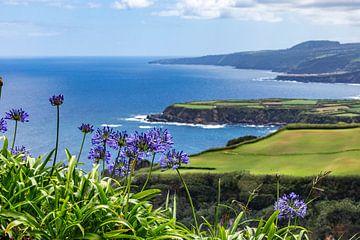Agapanthus bloemen (Azoren) von Easycopters