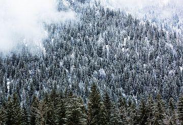 Forêt d'hiver dans les montagnes avec du brouillard