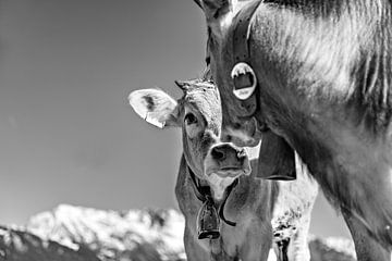 Schnupperig von kuh-bilder.de