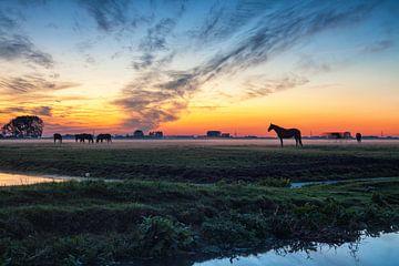Grazende paarden bij zonsondergang aan de stadsrand van Groningen van