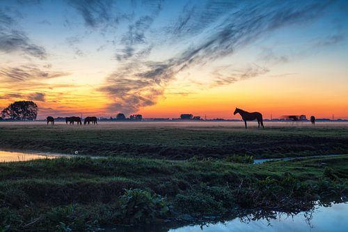 Grazende paarden bij zonsondergang aan de stadsrand van Groningen van Evert Jan Luchies