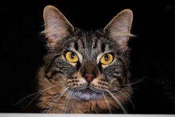 Prachtige cyperse kat met gele ogen van Maud De Vries