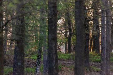 Bos in het voorjaar van Evert Jan Kip