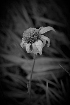 Blumen &Ampel; Pflanzen von MartinsPhotocorner