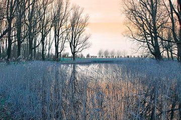 Landschap met riet van Corinne Welp