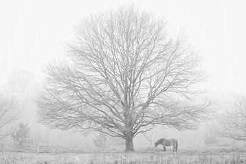 Winterlandschap van Cécile den Ouden