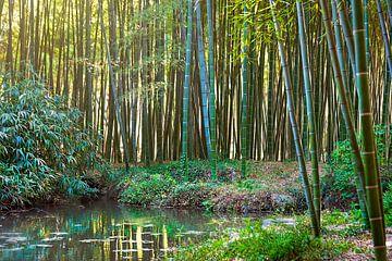 Chinesischer Bambuswald von Anouschka Hendriks