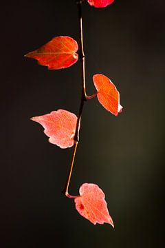 Een sliert met herfst von Marco de Groot