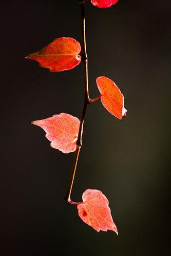 Een sliert met herfst van