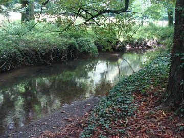 bos en rivier van David Van der Cruyssen