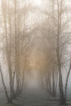 Berken bij zonsopkomst in de mist van Margot Hartgers
