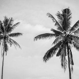Palmiers noirs et blancs à Bali sur Ellis Peeters