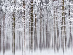 Into the White White Woods